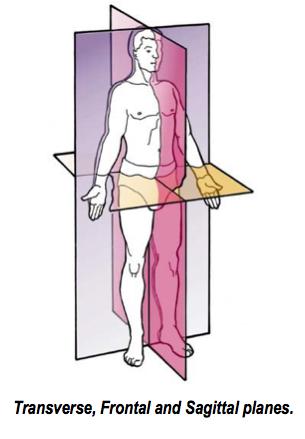 Basic Anatomical Concepts Footmaxx