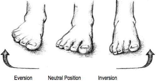 Basic Anatomical Concepts - Footmaxx